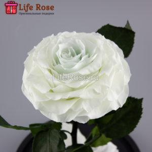 Голубая роза в колбе Premium X