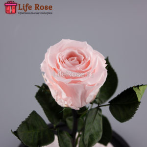 Розовая роза в колбе Premium