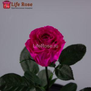 Фуксия роза в колбе Premium