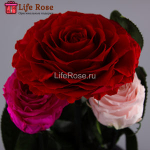 Три розы в колбе xXx