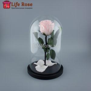 Светло Розовая роза в колбе Premium
