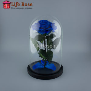 Синяя роза в колбе Premium X
