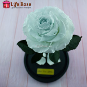 Небесно-Голубая роза в колбе Premium X