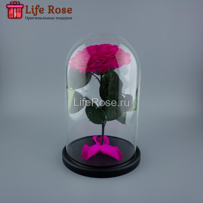 Фуксия роза в колбе Premium X