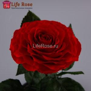 Красная роза в колбе KING
